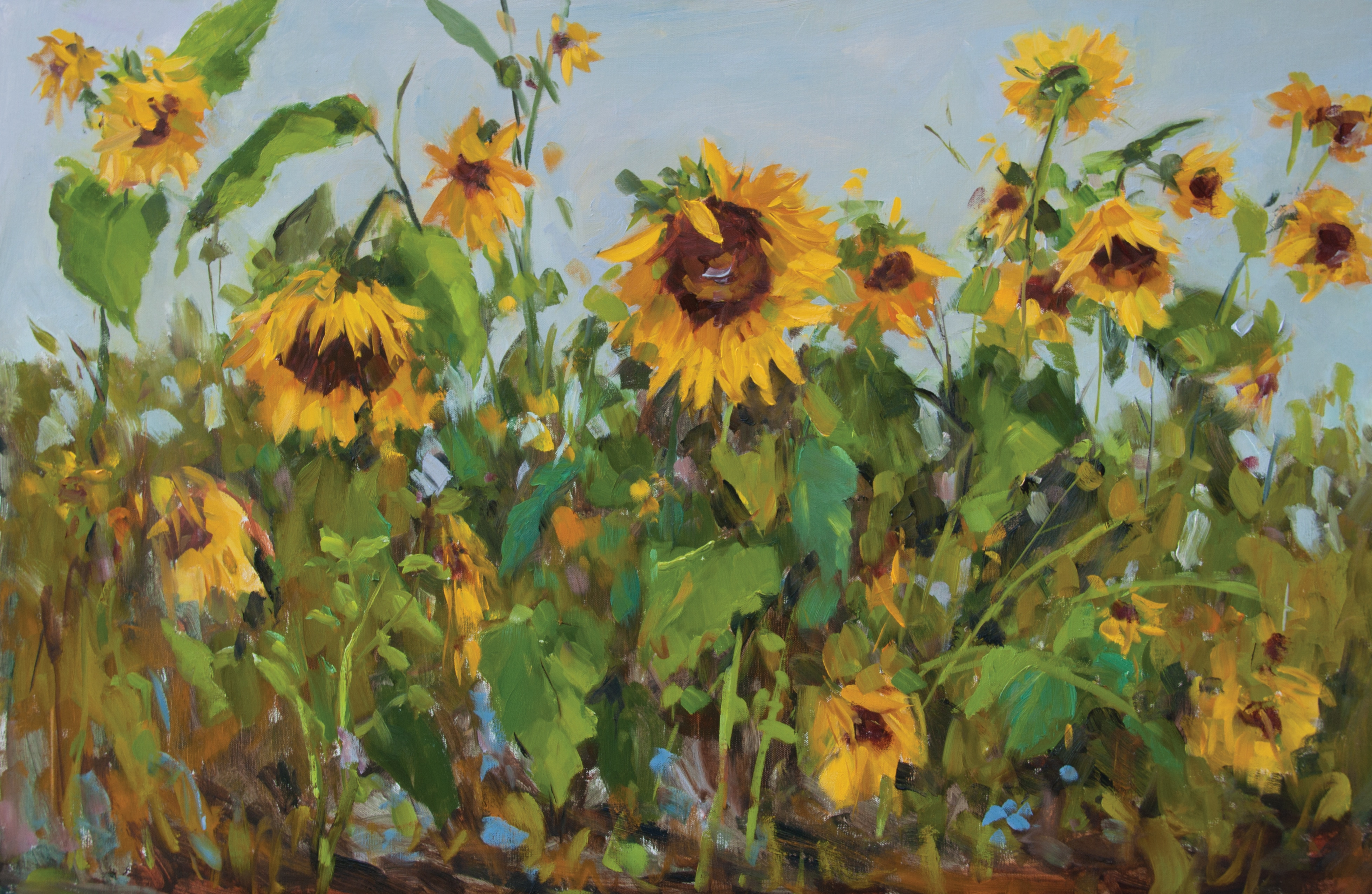 Kelly Kane S Pick Of The Week Sunflowers In The Garden